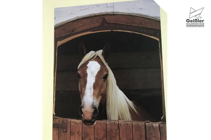 Kindgerechte Gestaltung in Kinderzimmer, Kindertageseinrichtung oder Grundschule - Wunschmotive als Tapete - Pferdemotiv